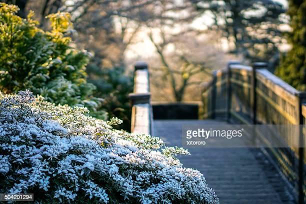 Queen Elizabeth Park with Snow Makeup