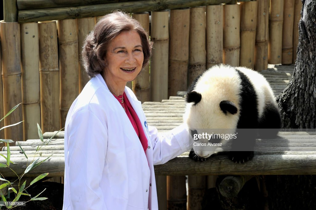 Queen Sofia of Spain visits Panda bears at the Zoo Aquarium on March 29, 2011 in Madrid, Spain.