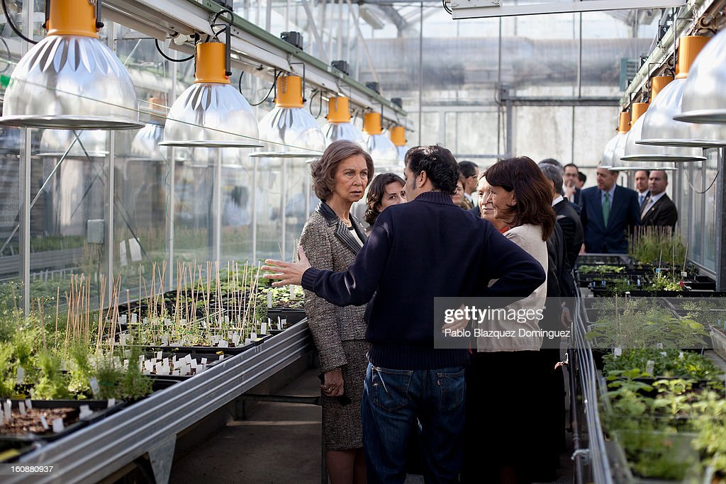 <a gi-track='captionPersonalityLinkClicked' href=/galleries/search?phrase=Queen+Sofia+of+Spain&family=editorial&specificpeople=160333 ng-click='$event.stopPropagation()'>Queen Sofia of Spain</a> visits the National Biotechnology Centre on February 7, 2013 in Madrid, Spain.