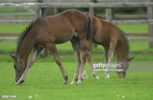 Quickzee the second foal conceived in Europe via a process known as ICSI Eazee the first This was undertaken by scientists at Vet ART based at the...
