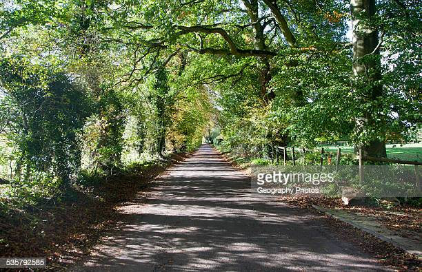 Quiet treelined country lane in autumn Lockeridge Wiltshire England UK