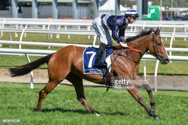 Quilate ridden by Beau Mertens heads to the barrier before the Nick Johnstone Real Estate Ladies' Day Vase at Caulfield Racecourse on October 18 2017...