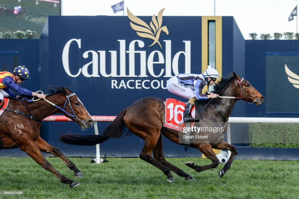 Quilista ridden by Damian Lane wins the Beveridge Williams Plate at Caulfield Racecourse on August 19, 2017 in Caulfield, Australia.