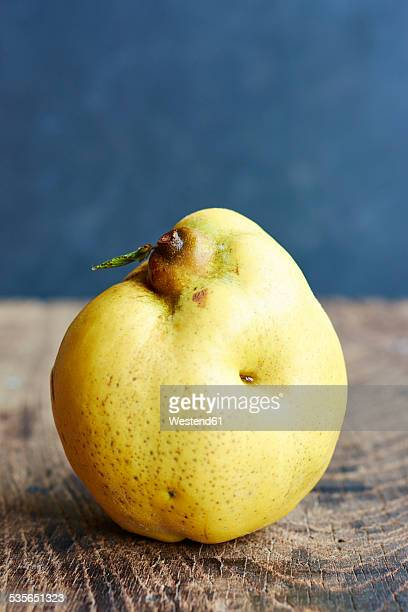 Quince, Cydonia oblonga, standing on wood