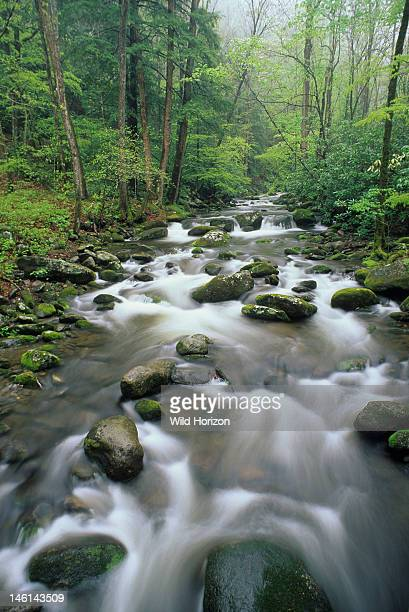 Quintessential Appalachian spring scene Big Creek Great Smoky Mountains National Park North Carolina USA