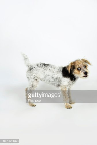 Quirky portrait of cross breed dog : Stock Photo
