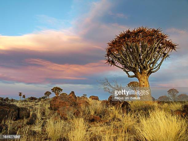 Quiver Tree and Rocky Landscape