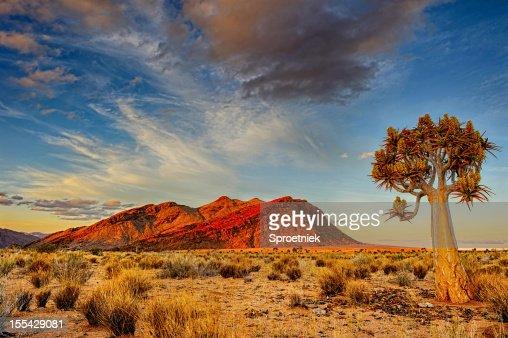 Quiver tree at dusk