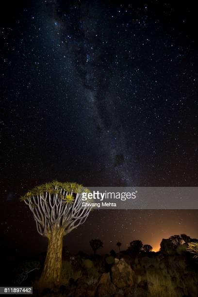 Quiver Trees at Namibia