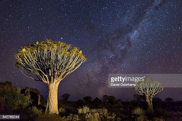 Quiver Trees with Milky Way at Giants Playground in Keetsmanshoop, Namibia, Africa.