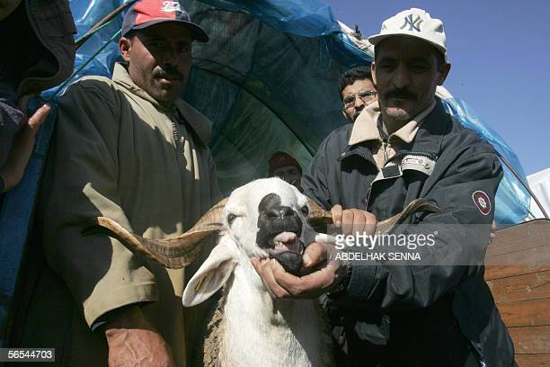 Moroccan peasants sell sheep at a market in Rabat 09 January 2005 ahead of the Muslim festival of Eid alAdha Eid alAdha or the feast of sacrifice is...