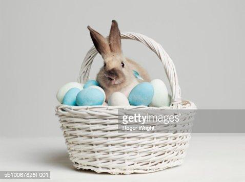 Rabbit amongst coloured eggs in basket, studio shot : Stock Photo