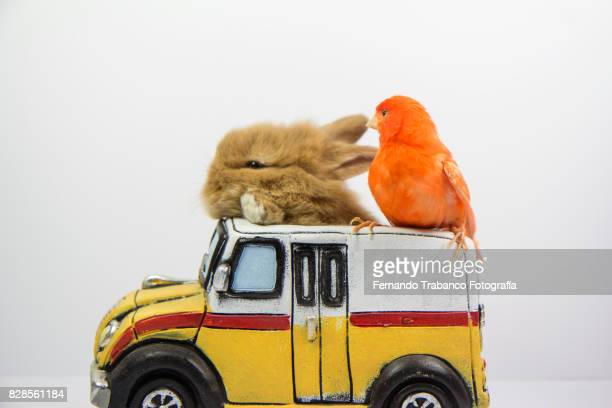 Rabbit and bird travel in a truck
