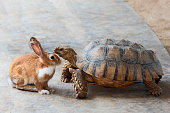 "Rabbit and turtle are discussing the competition.""r"