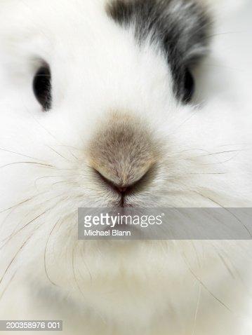 Rabbit, close-up : Stock Photo