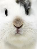 Rabbit, close-up