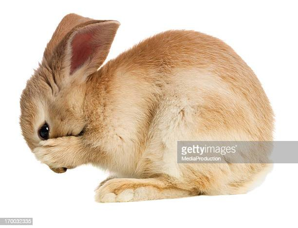 Rabbit covering her mouth