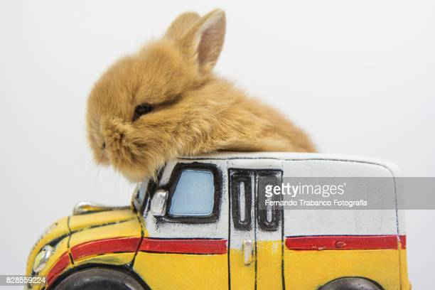 Rabbit drives a school bus