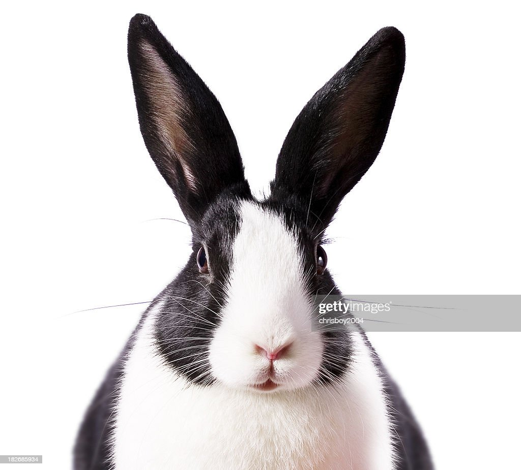 Rabbit Eared