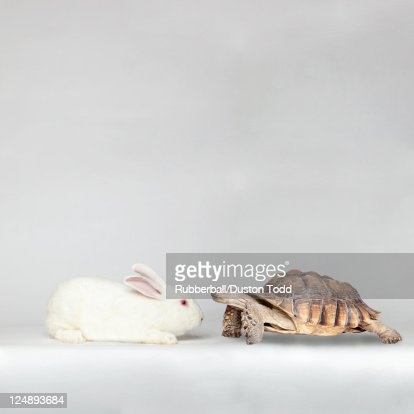 Rabbit face to face with turtle : Stock Photo