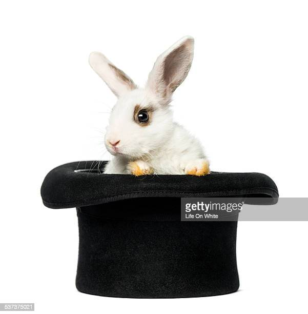 Rabbit getting out of a top hat