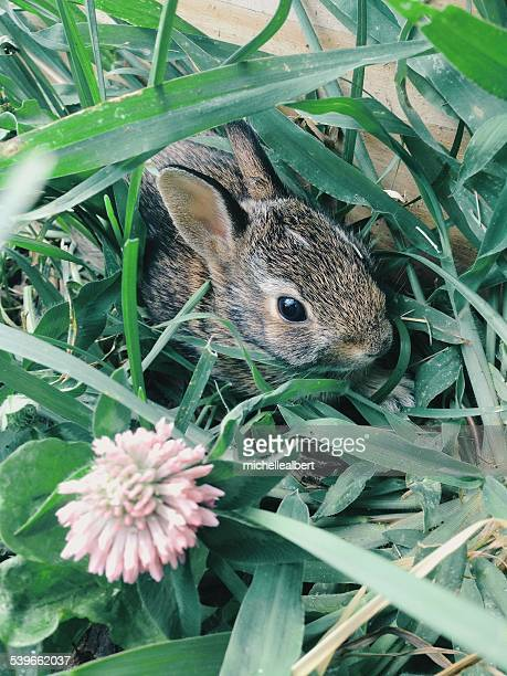 Rabbit hiding in long grass
