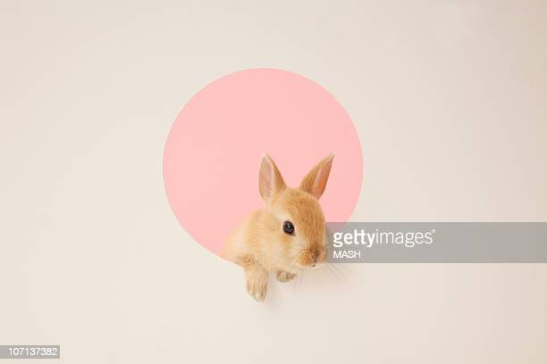 rabbit in a hole