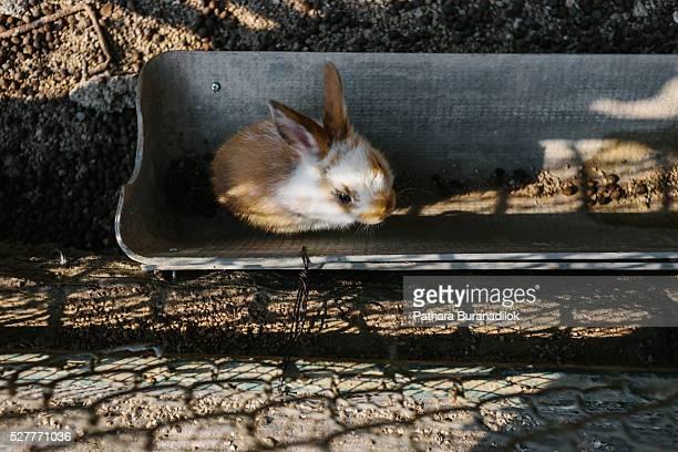 Rabbit in the pet farm
