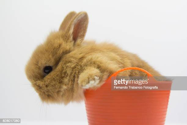 Rabbit inside a basket