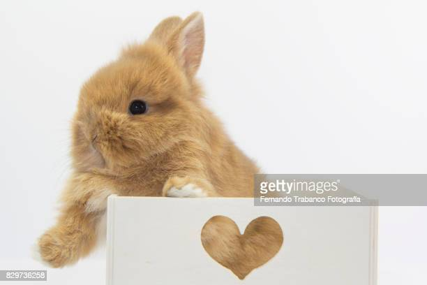 Rabbit inside a wooden box with love hearts