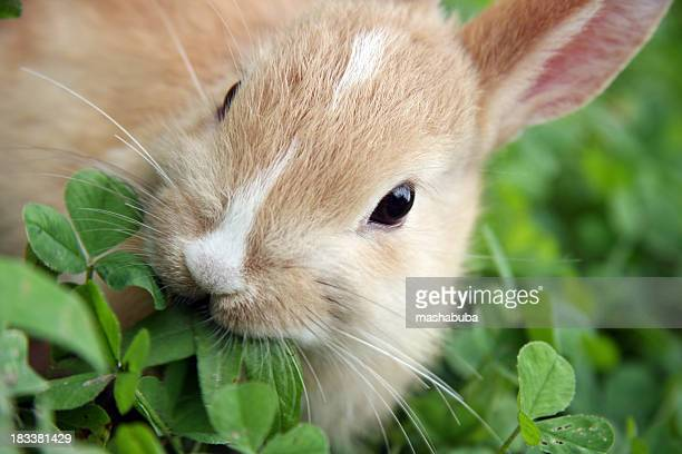 A rabbit munching the leaves of a green plant