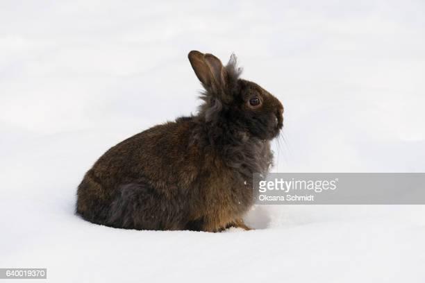 Rabbit on snow.