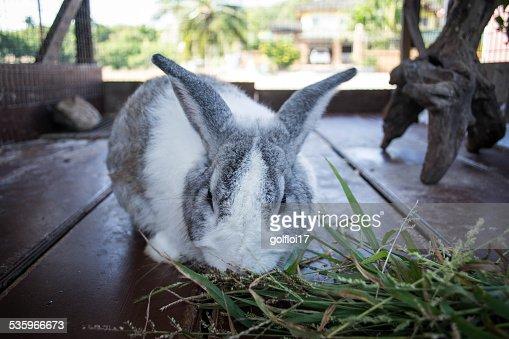 Rabbit : Stock Photo