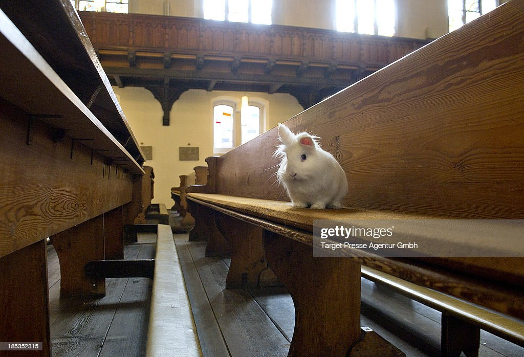 A rabbit sits on a church bench during a mass for house pets and cuddly toys at catholic church 'Herz Jesu' on October 19, 2013 in Berlin, Germany. This is the first time the Catholic Church have undertaken such a mass and they will repeat it next year after it's success. 20 children along with their cuddly toys received a blessing as well as a bird, rabbit and fish.