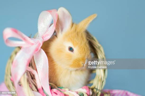 Rabbit sitting in a wooden basket with pink ribbon