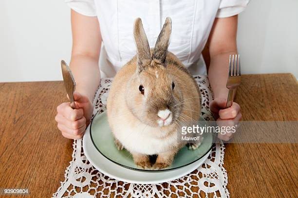 Rabbit sitting on a plate