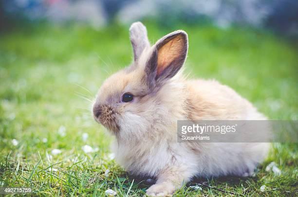 Kaninchen sitzen auf Gras