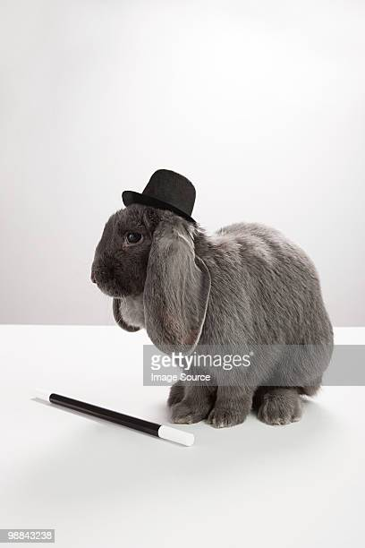 Rabbit wearing top hat with magic wand
