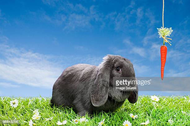 Rabbit with dangling carrot