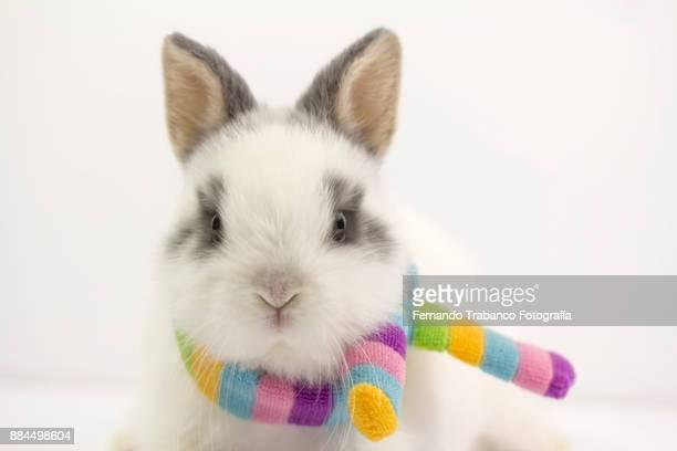 Rabbit with rainbow scarf around his neck