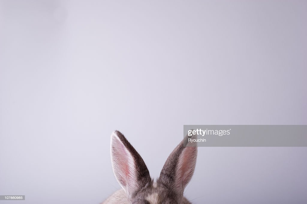 rabbit,animal,it is pretty : Stock Photo