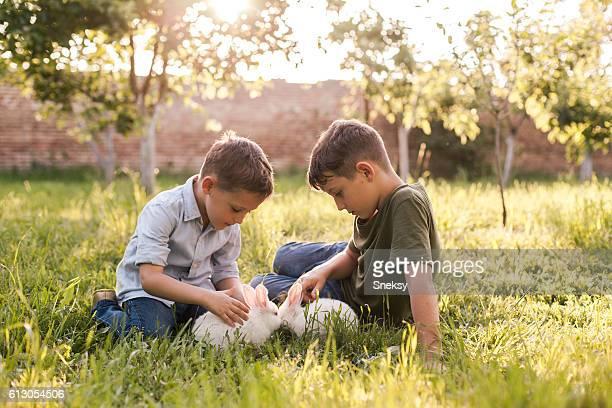 Kaninchen und niedlich Jungen