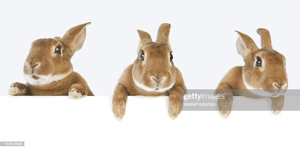 Rabbits holding a banner