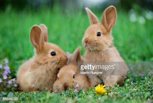 Rabbits in meadow : Stock Photo