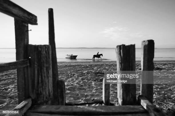 A race horse canters during a training session at Balnarring Beach on October 18 2017 in Melbourne Australia Balnarring Beach is a remote beach on...