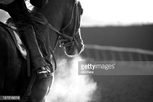 Race Horse Galloping
