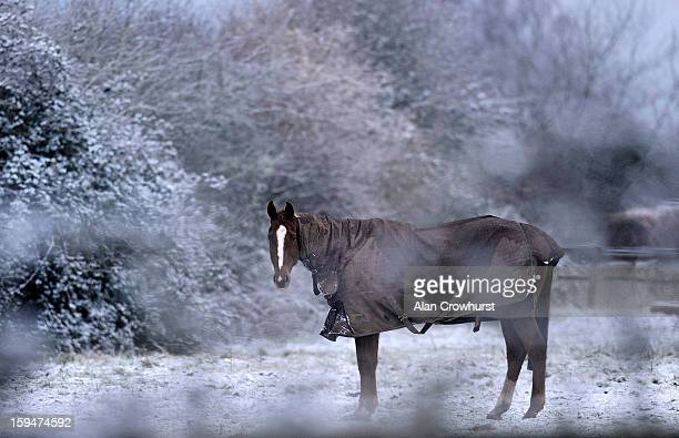 A racehorse in a paddock after snowfall on January 14 2013 in Findon England