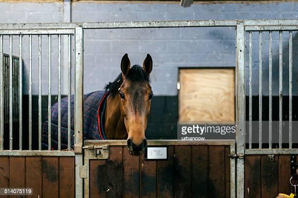 Rennpferd in eine stabile