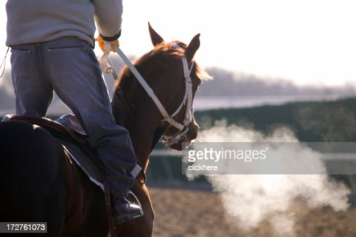 Racehorse on Track