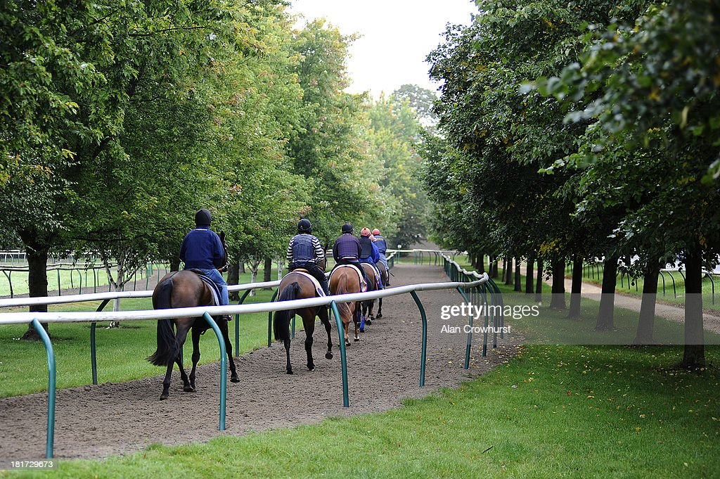 Racehorses exercise in the Severals Rings on September 24, 2013 in Newmarket, England.